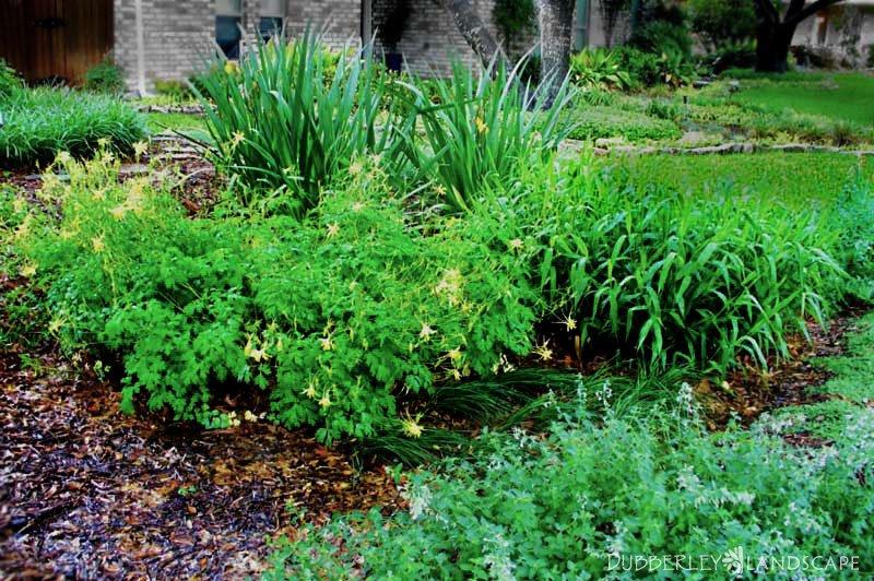 Rain garden after a rain