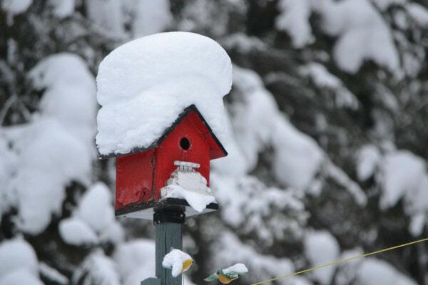 Snow On Bird House