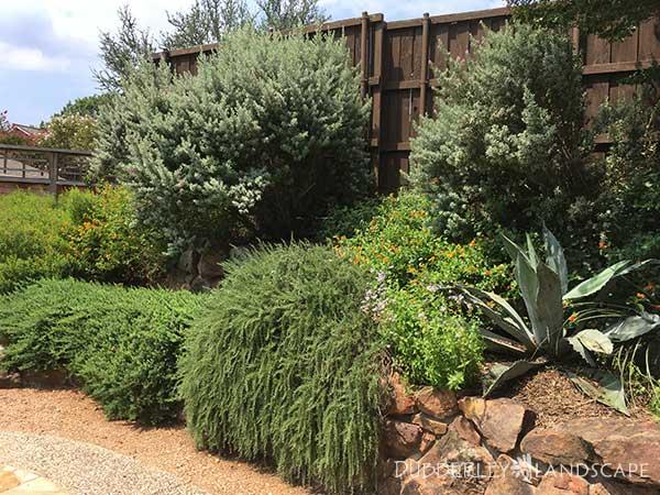 Stone Retaining Wall Texas Native Plants