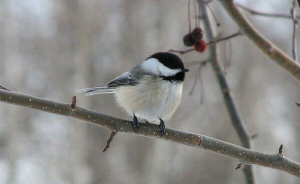 bird in winter on tree branch